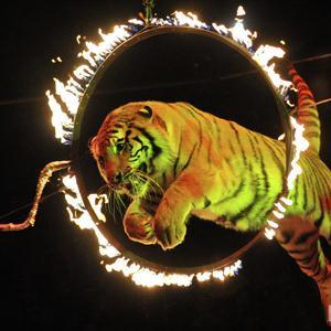 Цирки Динской