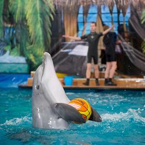 Дельфинарии, океанариумы Динской