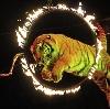 Цирки в Динской
