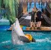 Дельфинарии, океанариумы в Динской
